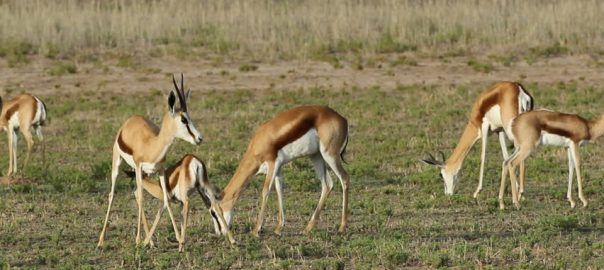 Linksfontein Safari Lodge Animals